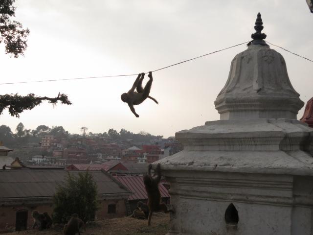 Monkey Acrobat