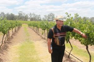 Bapak saya dengan semangat melihat anggur-anggur yang ranum
